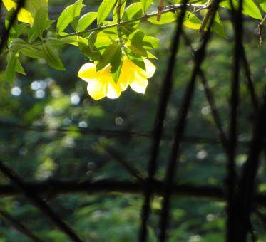 Free Stock Photo of Backlit Yellow Flower
