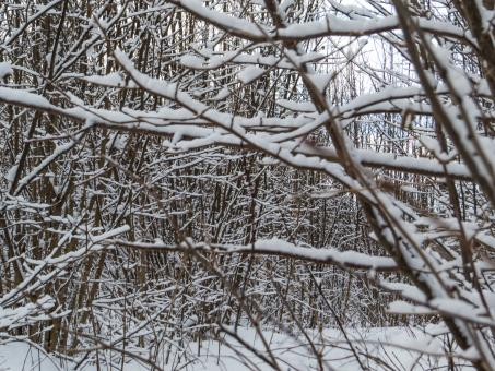 Free Stock Photo of Just some branches cover with snow