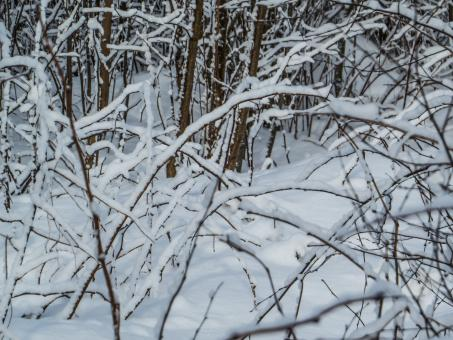 Free Stock Photo of Snow branches