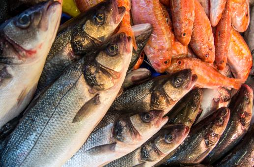 Free Stock Photo of Fresh fish in a market