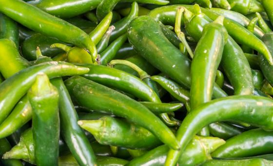Free Stock Photo of spicy green hot chili peppers