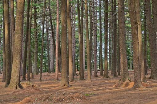 Free Stock Photo of Dorwin Forest - HDR