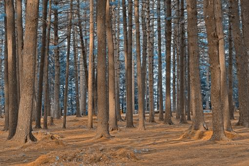 Free Stock Photo of Dorwin Forest - Winter Blue HDR