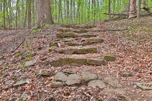 Free Stock Photo of Woodend Sanctuary Steps - HDR