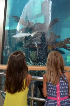 Free Stock Photo of Kids near aquarium