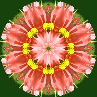 Free Stock Photo of kaleidoscope flower mandala