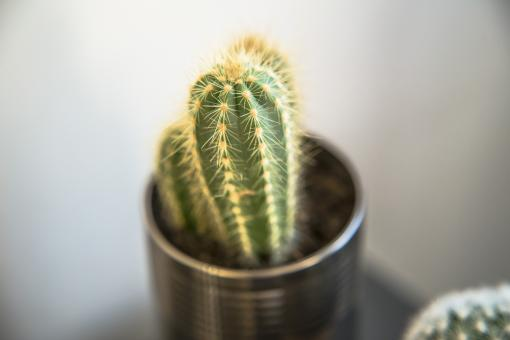 Free Stock Photo of Home Cactus