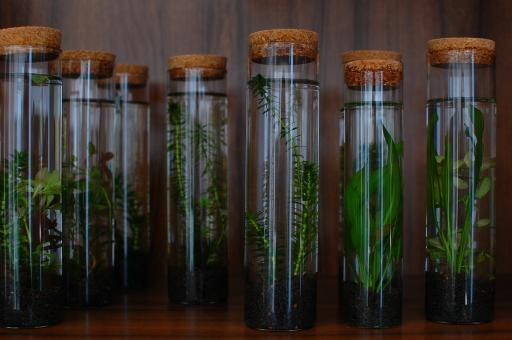 Free Stock Photo of Plants in Tubes