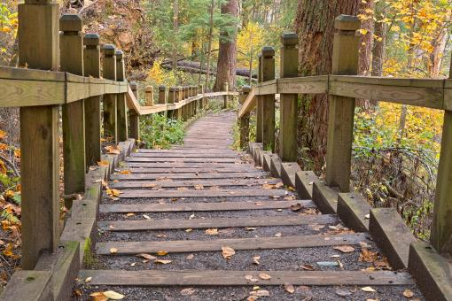 Free Stock Photo of Swallow Fall Stairway - HDR