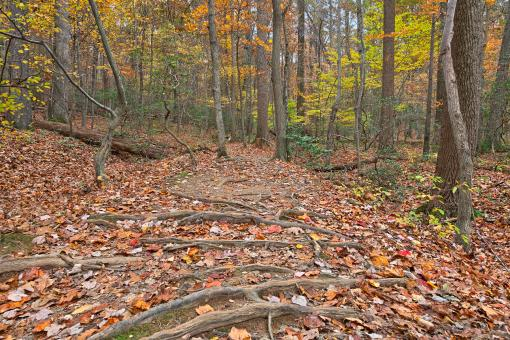 Free Stock Photo of Seneca Fall Forest Trail - HDR