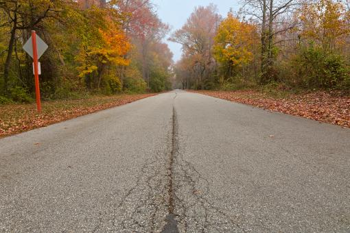 Free Stock Photo of Misty Fall Road - HDR