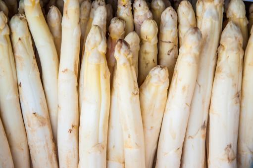 Free Stock Photo of White Asparagus