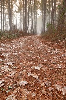 Free Stock Photo of Misty Winter Trail - HDR