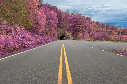 Free Stock Photo of Lavender Skyline Drive - HDR