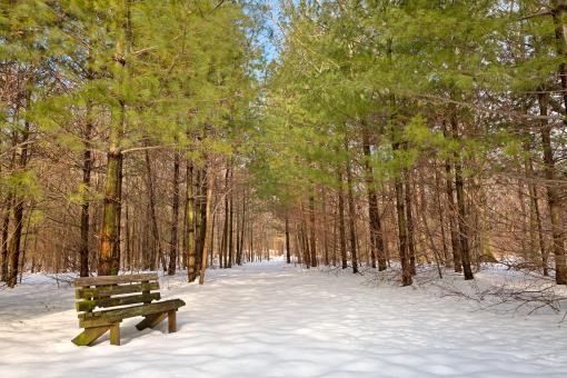 Free Stock Photo of Winter Pine Trail - HDR