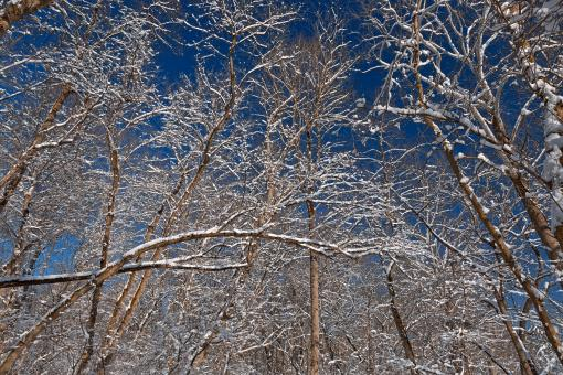 Free Stock Photo of Susquehanna Winter Foliage - HDR