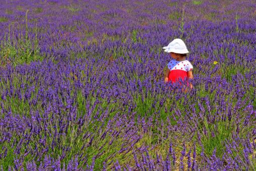 Free Stock Photo of Child in a lavender plantation