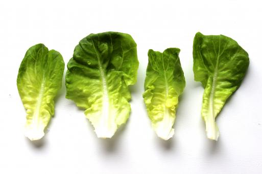 Free Stock Photo of Beautiful homegrown lettuce