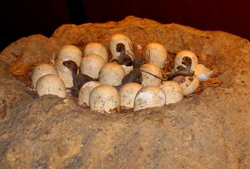 Free Stock Photo of Newly hatched dinosaur eggs