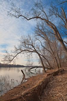 Free Stock Photo of Chisel Branch River Shore - HDR