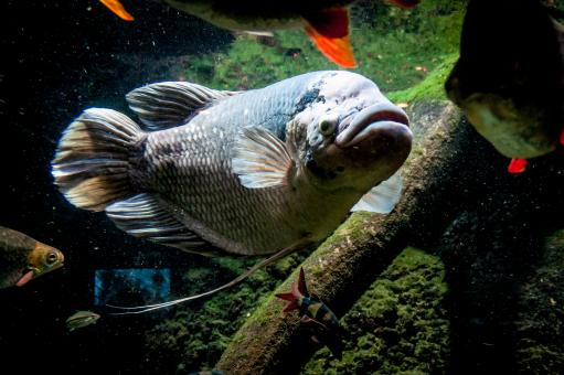 Free Stock Photo of big fish