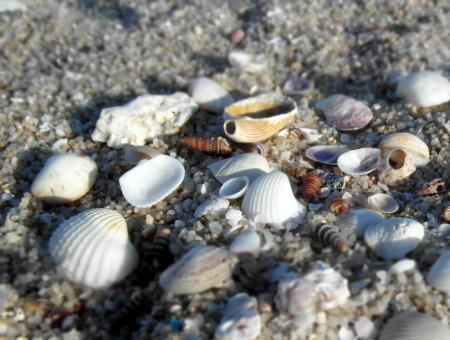 Free Stock Photo of Sea shells on the beach
