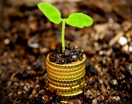 Free Stock Photo of Money growth concept - Coins in the soil