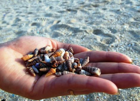 Free Stock Photo of Collecting Shells on the Beach