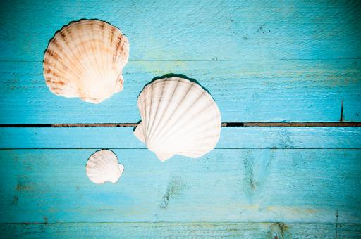 Free Stock Photo of Shells on blue wooden planks