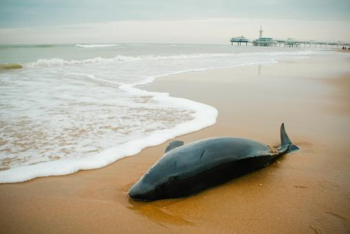 Free Stock Photo of Small Beached whale dolphin