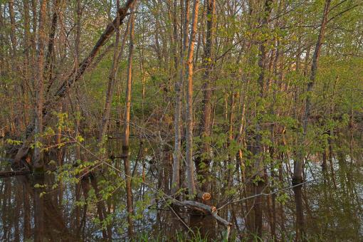 Free Stock Photo of McKee-Beshers Marsh - HDR