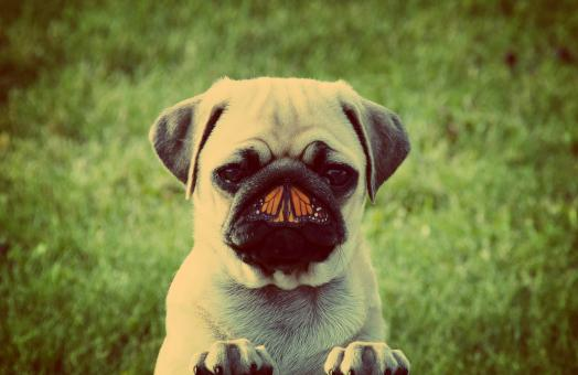Free Stock Photo of Dog and butterfly - Unlikely friends concept