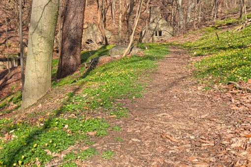 Free Stock Photo of Rustic Spring Trail - HDR