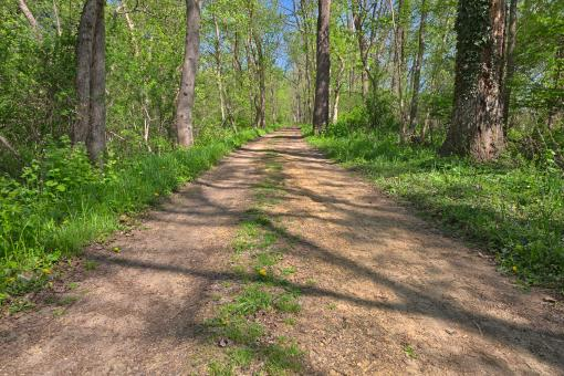 Free Stock Photo of Lush Spring Trail - HDR