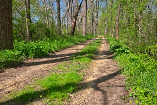 Free Stock Photo of Winding Spring Trail - HDR