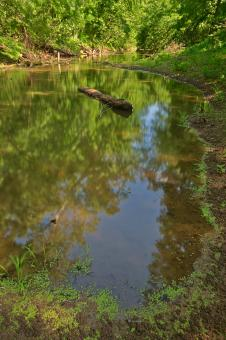 Free Stock Photo of Chisel Branch Creek - HDR