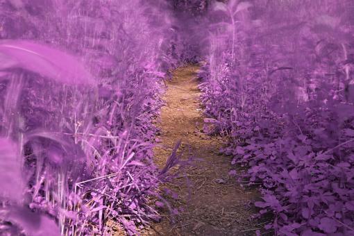 Free Stock Photo of Windy Goose Creek Trail - Lavender Fantasy HDR