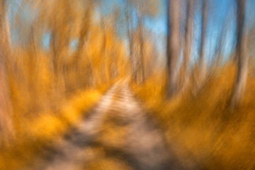 Free Stock Photo of Spinning Gold Trail