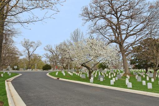 Free Stock Photo of Arlington Cemetery Road - HDR