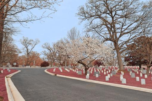 Free Stock Photo of Arlington Cemetery Road - Cerise Pink HDR