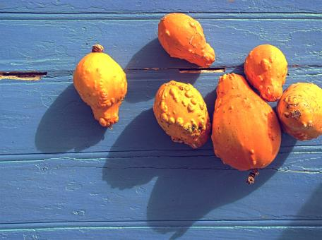 Free Stock Photo of Organic colorful pumpkins on blue wooden background