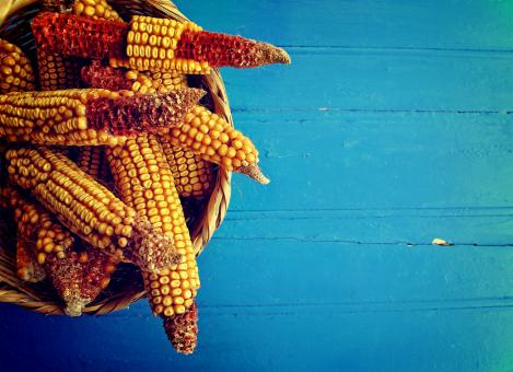 Free Stock Photo of Corn cobs in a basket on rustic blue wooden background