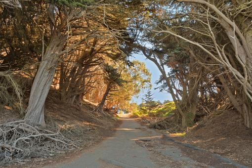 Free Stock Photo of Lands End Forest Trail - HDR