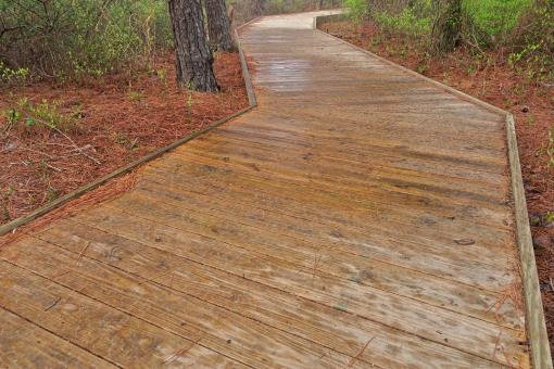 Free Stock Photo of Assateague Island Boardwalk Trail - HDR