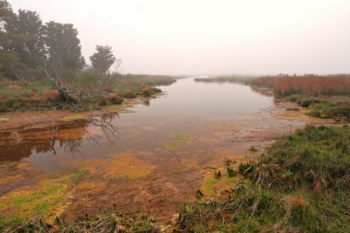Free Stock Photo of Misty Assateague Island Marsh - HDR