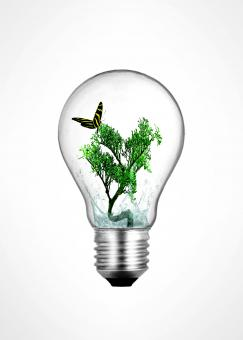 Free Stock Photo of Lightbulb with bonsai plant and butterfly inside