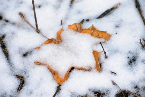 Free Stock Photo of Snow and leaf