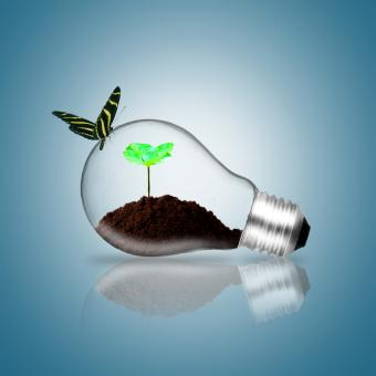 Free Stock Photo of Lightbulb with butterfly and plant sprout