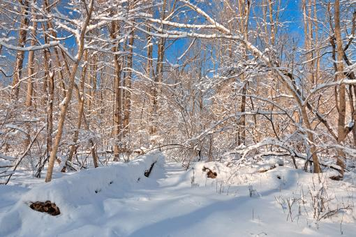Free Stock Photo of Susquehanna Winter Forest - HDR