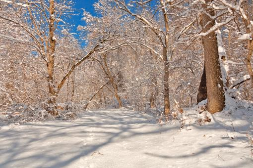 Free Stock Photo of Susquehanna Winter Forest Trail - HDR